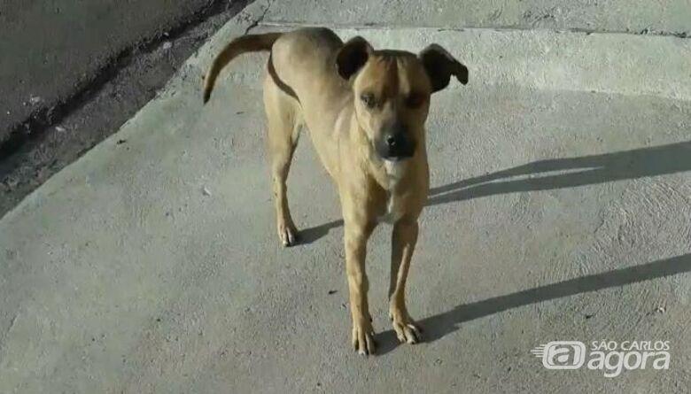 Morte violenta do cachorro Pimpão gera revolta; moradores farão protesto pacífico - Crédito: Divulgação