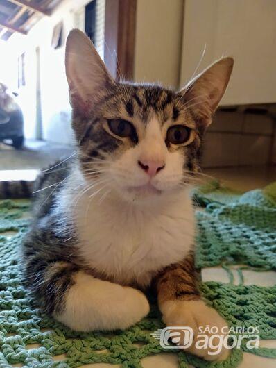 Homenagem Funerais Pet ao gatinho Theo -