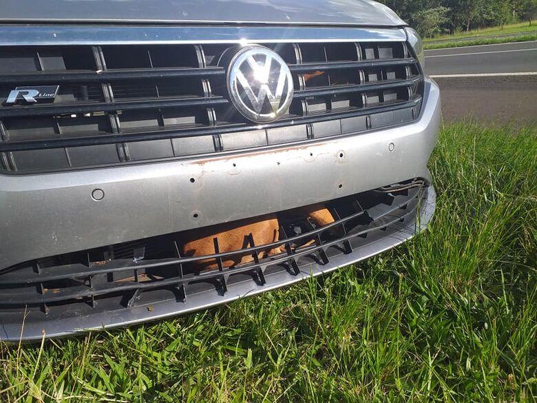 Cachorro escapou ileso do grave acidente. - Crédito: Arquivo pessoal