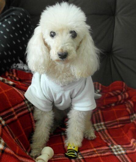 Homenagem da Funerais Pet a cachorrinha Belinha -