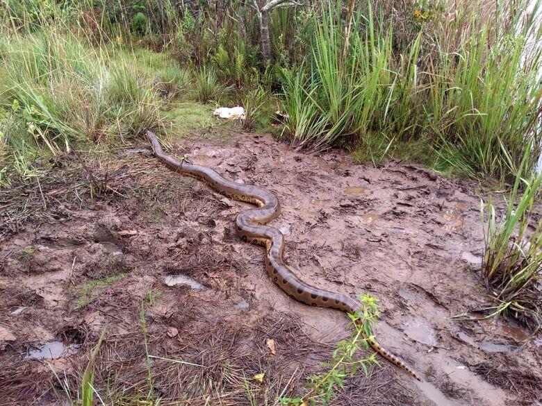 Cobra foi solta na natureza - Crédito: Colaborador/SCA