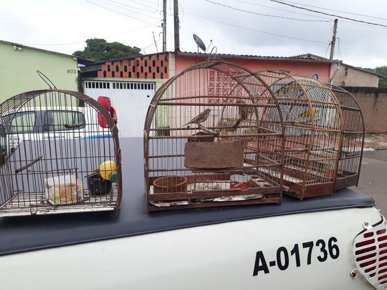 Polícia Ambiental encontra e liberta na natureza aves silvestres que eram mantidas em cativeiro e sob maus tratos -