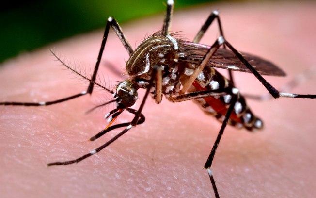 Ibaté intensifica ações de combate ao mosquito que causa a dengue - Crédito: Divulgação