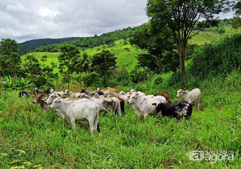 Animais da região norte de Minas Gerais - Crédito: Adilson Malagutti