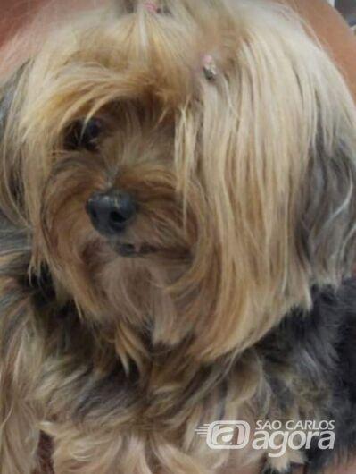 Homenagem Funerais Pet a cachorrinha Tuty -