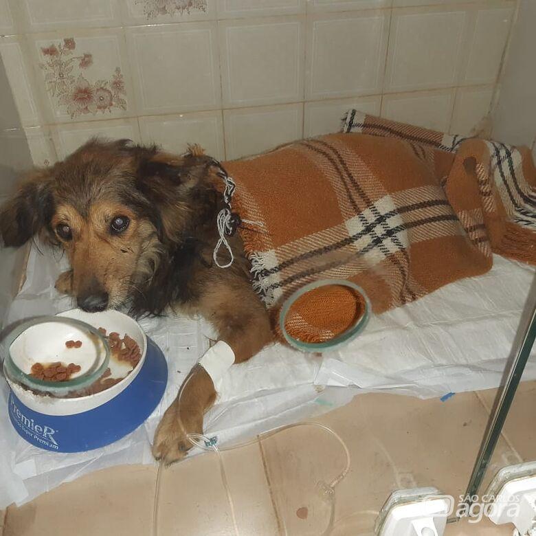 Homenagem da Funerais Pet ao cachorrinho Pererê -
