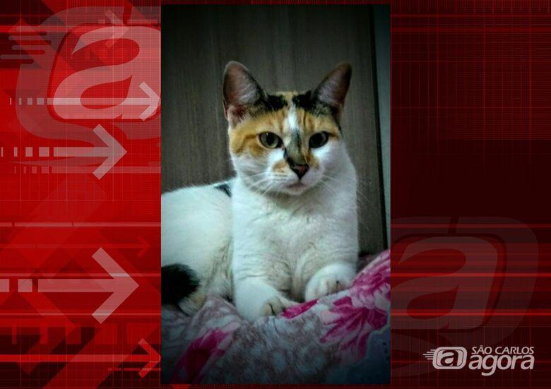Homenagem Funerais Pet a gatinha Cindy -