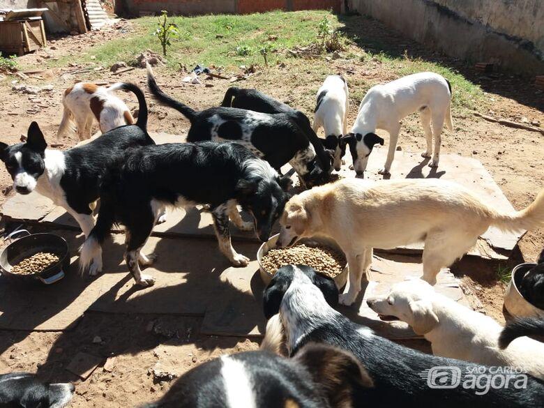 Protetora de animais pede ajuda e São Carlos Agora faz campanha solidária - Crédito: Divulgação