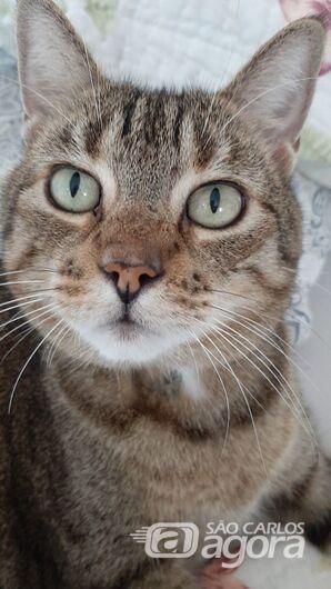 Homenagem Funerais Pet a gatinha Mimi -