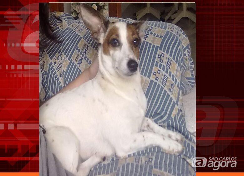 Homenagem da Funerais Pet a cachorrinha Lupita -