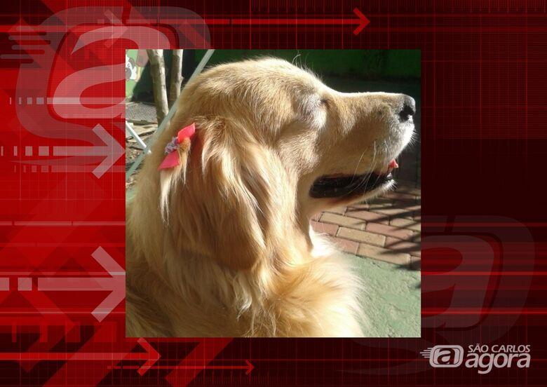 Homenagem da Funerais Pet a cachorrinha Mel -