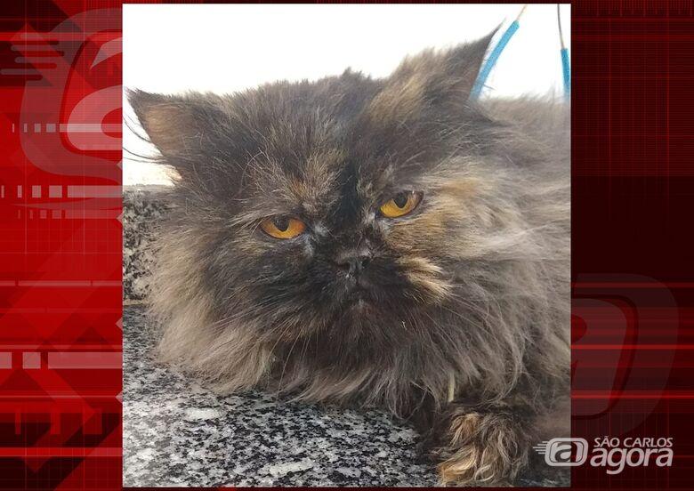 Homenagem da Funerais Pet a gatinha Mia -