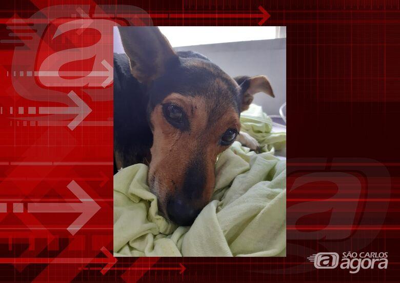 Homenagem da Funerais Pet a cachorrinha Nega -