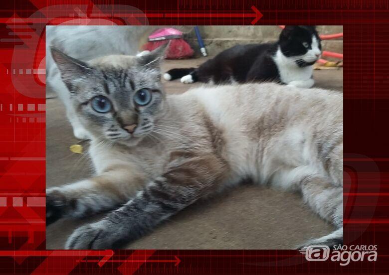 Homenagem da Funerais Pet a gatinha Sofy -