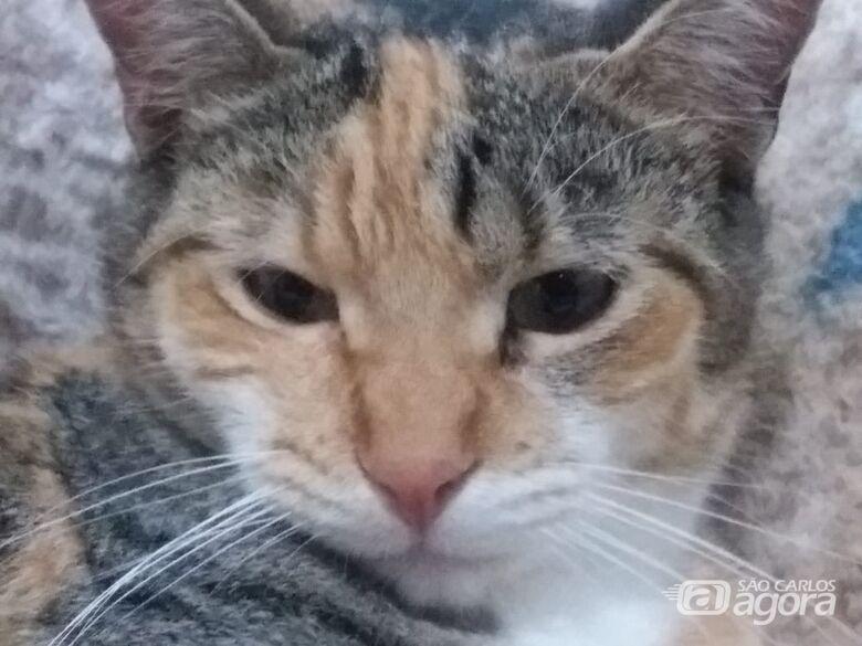 Procura-se a gatinha Titica que desapareceu no Jockey Clube -