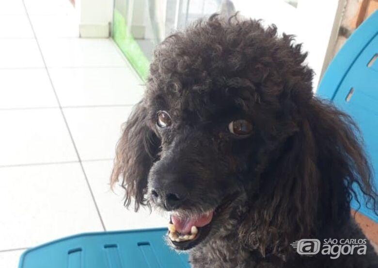 Homenagem da Funerais Pet ao cachorrinho Benício -