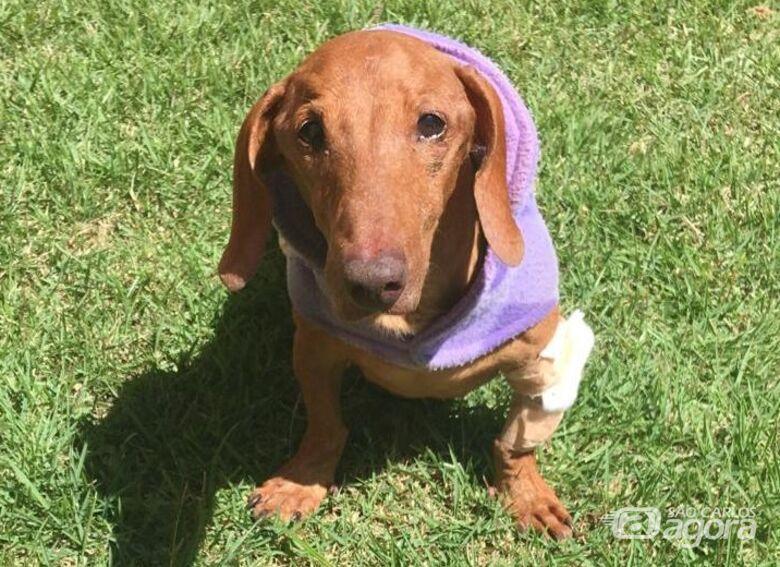 Homenagem da Funerais Pet ao cachorrinho Billy -