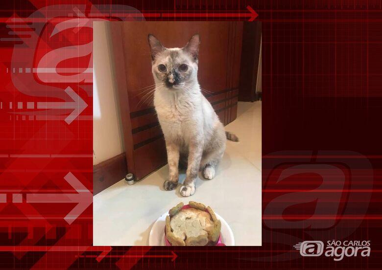 Procura-se gatinha Perola que desapareceu do Jardim Tangará -