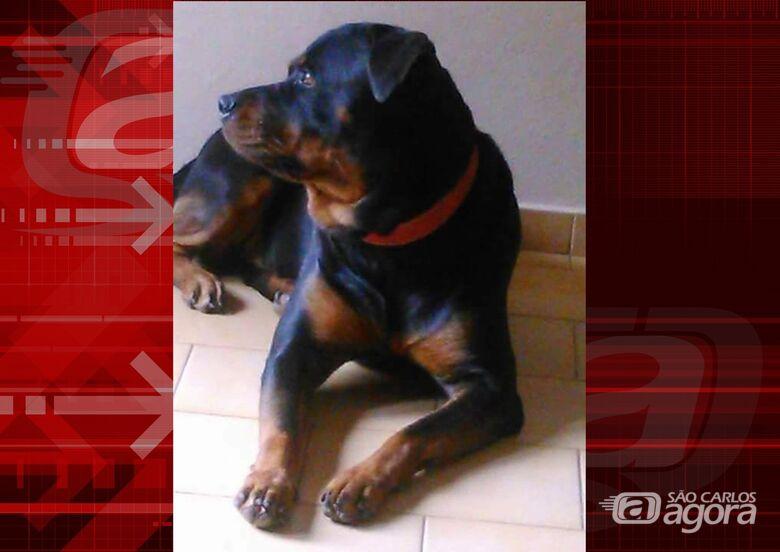Homenagem da Funerais Pet a cachorrinha Loren -