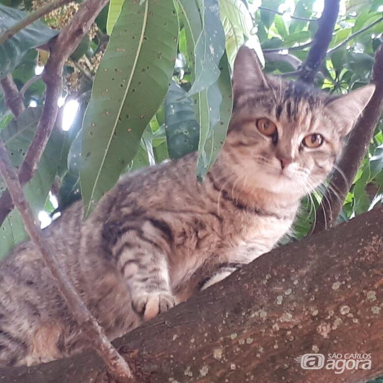 Homenagem da Funerais Pet à gata Belinha -