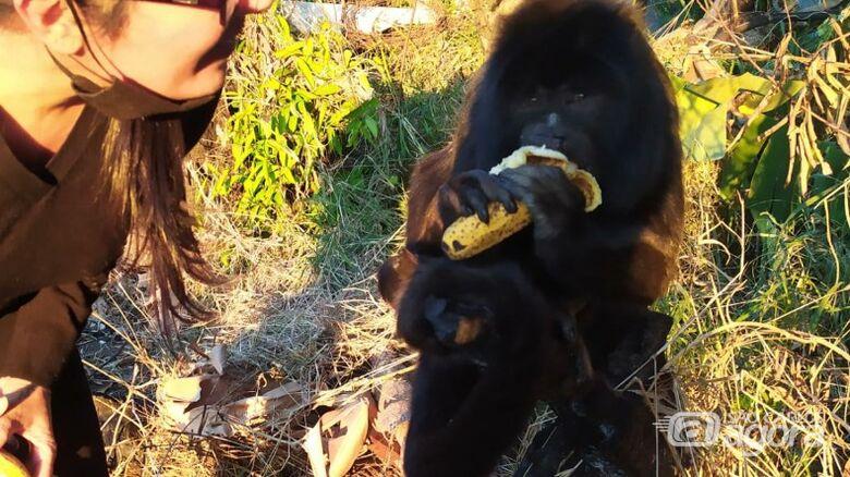 Macaco vira atração em praça - Crédito: Araraquara 24 Horas