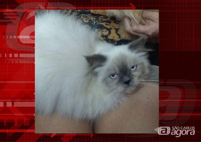 Homenagem da Funerais Pet ao gatinho Ulisses -