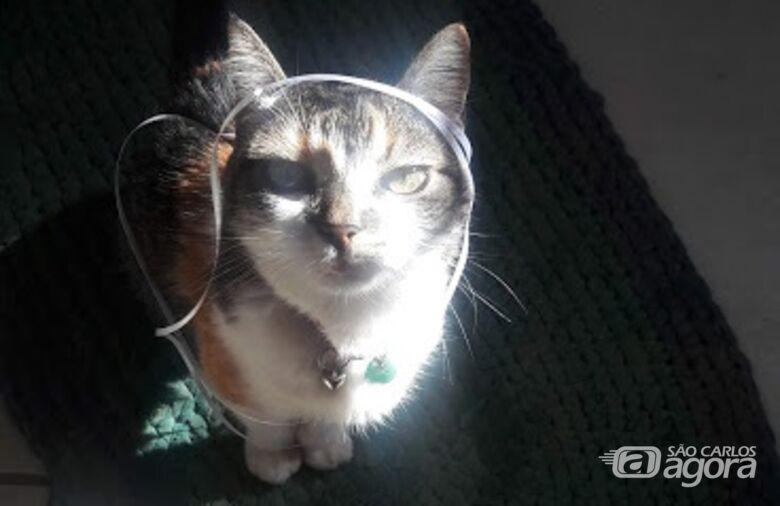 Homenagem da Funerais Pet à gatinha Brida -