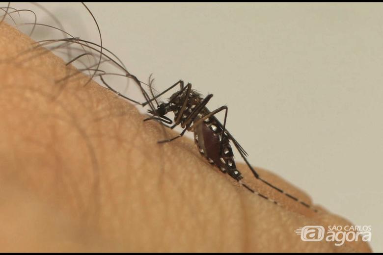 Casos de dengue chegam a 546 em São Carlos - Crédito: Divulgação