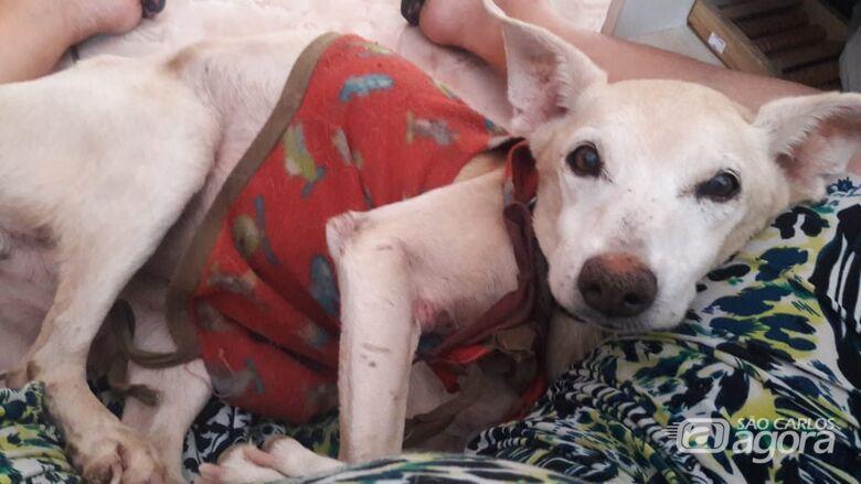 Homenagem da Funerais Pet ao cachorrinho Keyko -