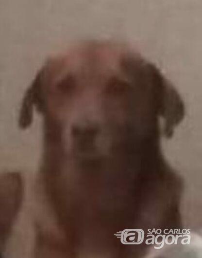 Homenagem da Funerais Pet ao cachorrinho Scoby -