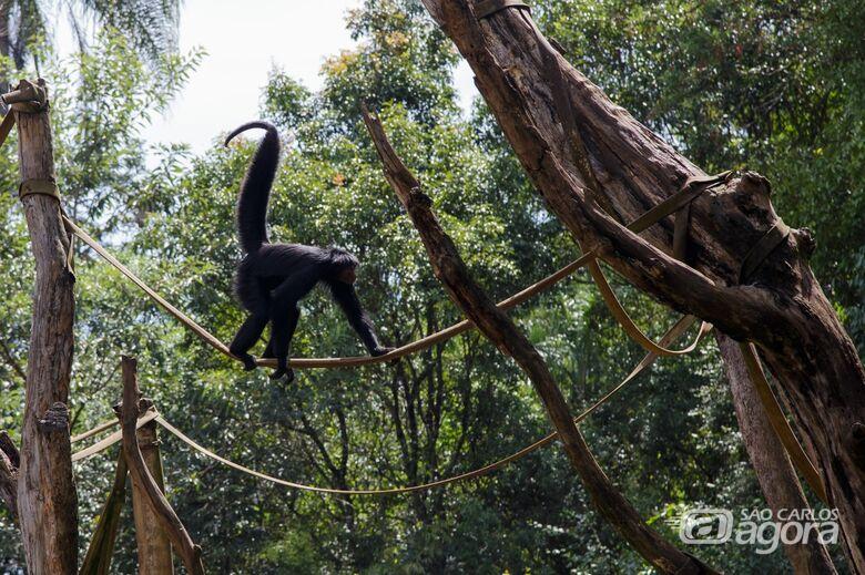 Parque Ecológico e outras instituições de conservação ambiental oferecem curso virtual - Crédito: Divulgação
