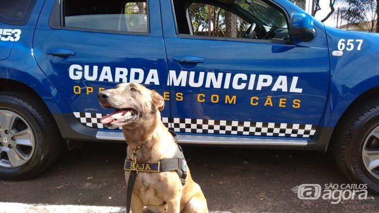 Canil da GM encontra drogas escondidas ao pé de uma árvore no São Carlos 5 - Crédito: Divulgação