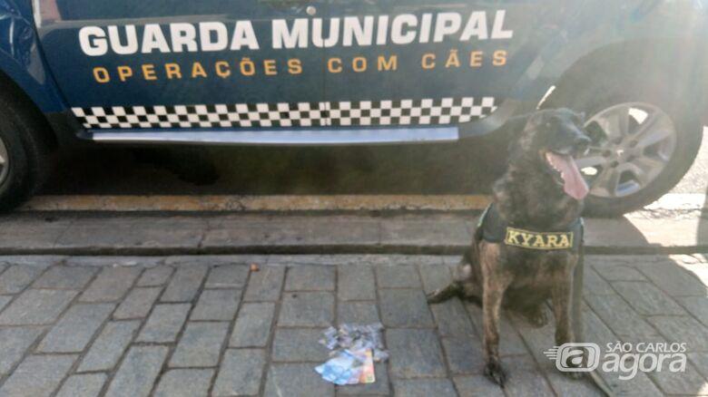 Cachorra da GM localiza entorpecentes escondidos no Romeu Tortorelli - Crédito: Divulgação