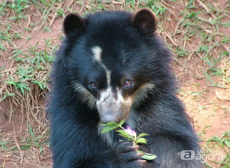 Parque Ecológico: Ursa de Óculos completa 27 anos e luta contra um câncer -