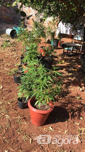 Estudantes são acusados de cultivar maconha dentro de casa - Crédito: Maycon Maximino