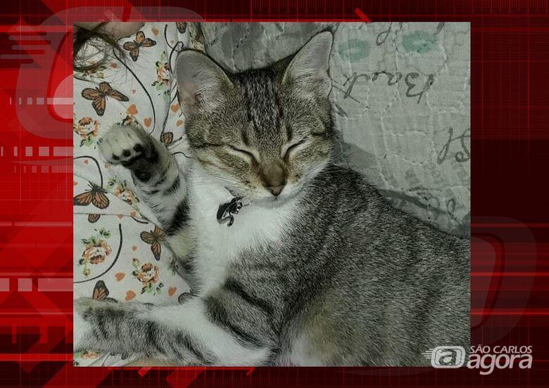 Gatinha Dora desapareceu na região do Monte Carlo. Ajude a encontrá-la. -