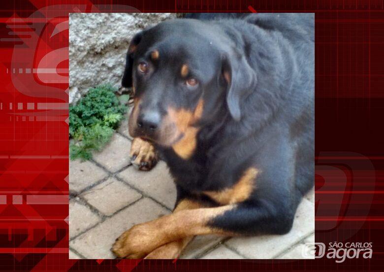 Homenagem da Funerais Pet a cachorrinha Safira -