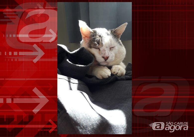 Homenagem da Funerais Pet ao gatinho Olavo -