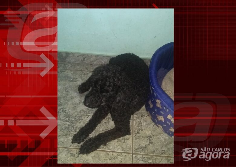 Homenagem da Funerais Pet ao cachorrinho Pingo -
