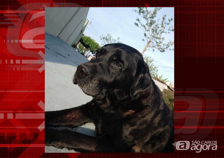 Homenagem da Funerais Pet ao cachorrinho Akeem -