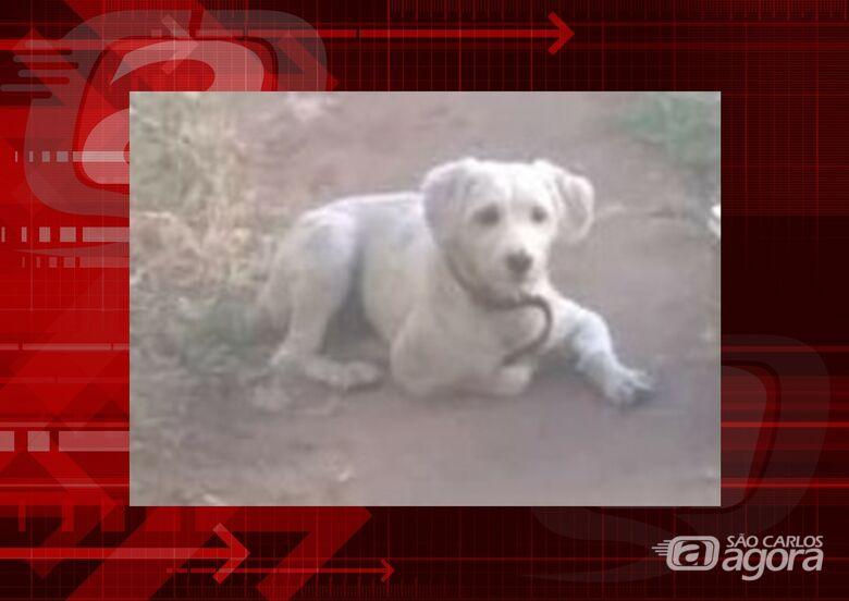Cachorro Thor desapareceu na região do Bicão. Ajude a encontrá-lo -