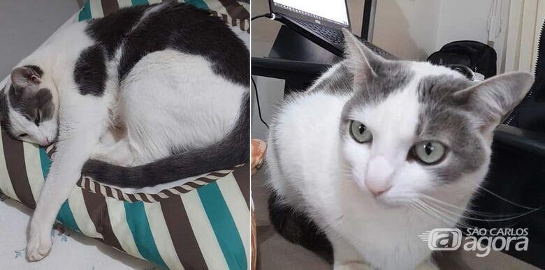 Gatinha Poppy desapareceu na região do Paulistano. Ajude a encontrá-la -
