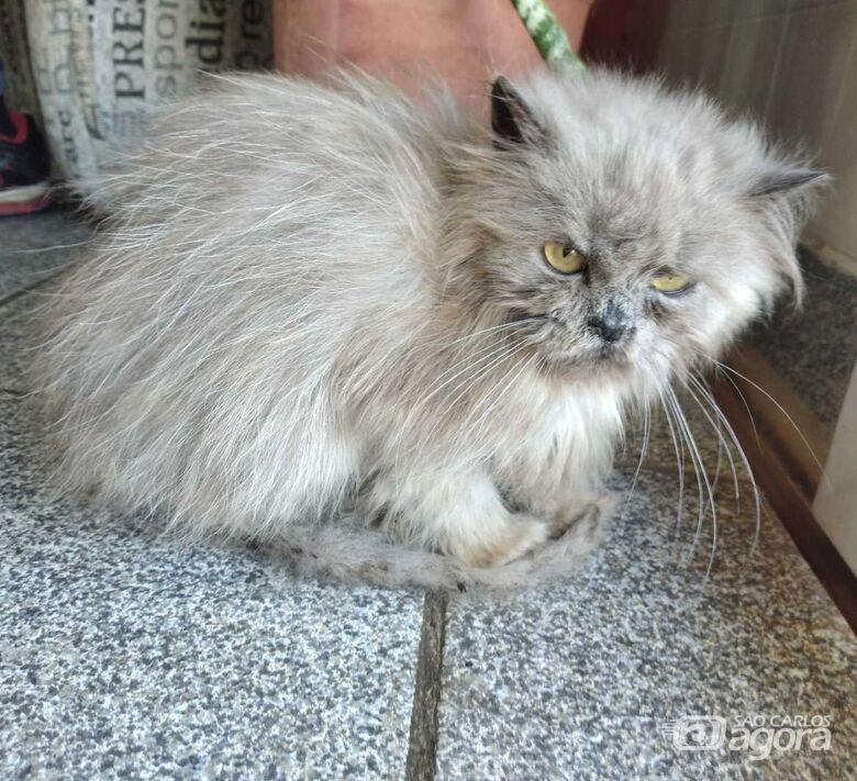 Homenagem da Funerais Pet à gatinha Izzy -