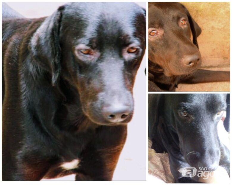 Homenagem da Funerais Pet ao cachorro Laikan -