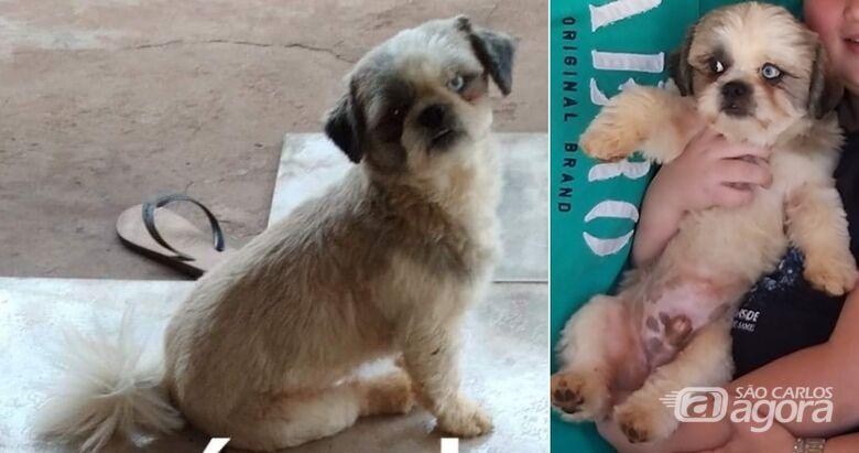 Cachorro Chulé desapareceu na região do Abdelnur/Zavaglia. Ajude a encontrá-lo -