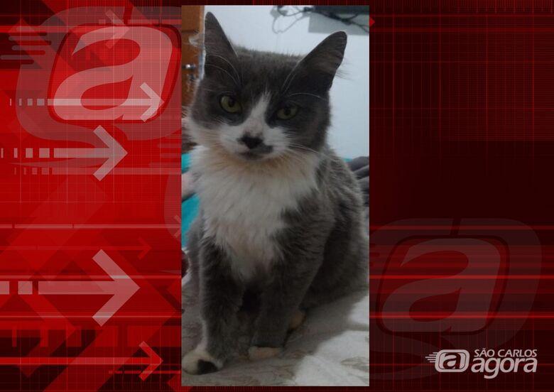 Procura-se gatinha Berenice que desapareceu na região do Jardim Munique. -