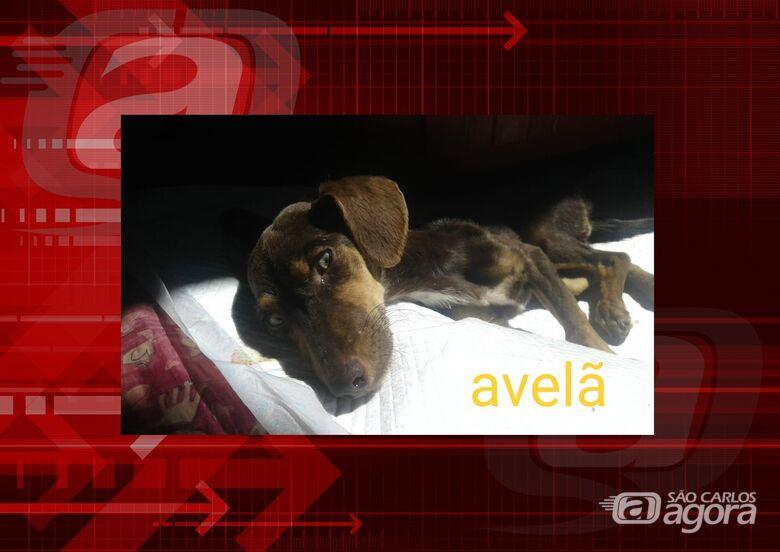 Homenagem da Funerais Pet a cachorrinha Avelã -