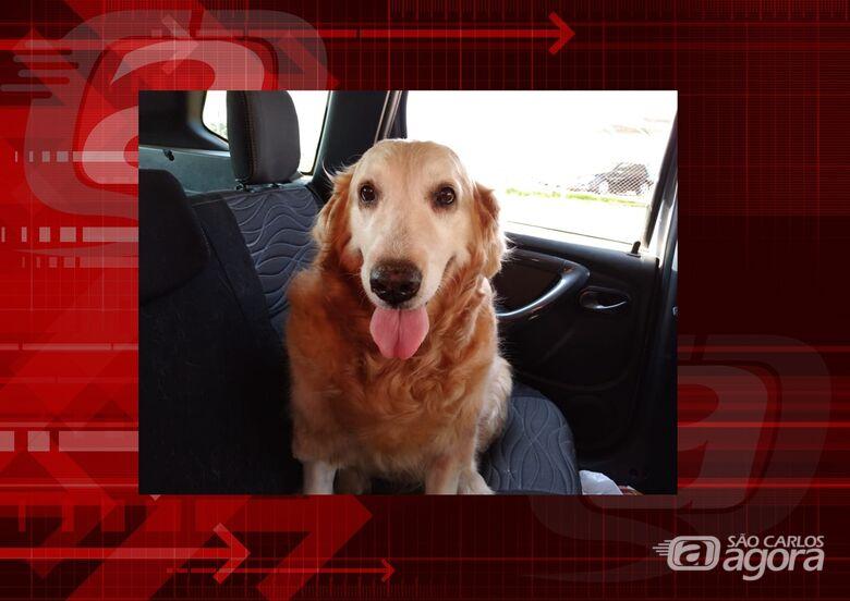 Homenagem da Funerais Pet a cachorrinha Lótus -