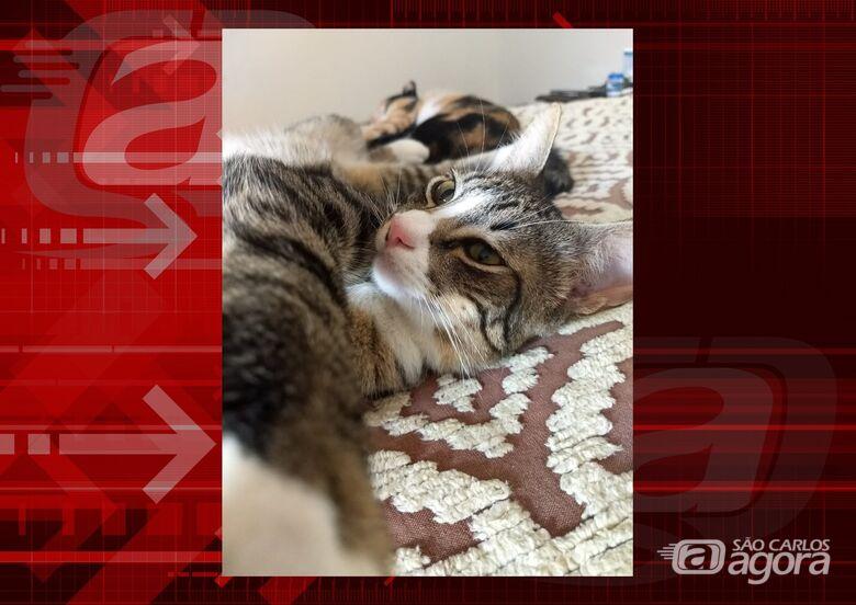Homenagem da Funerais Pet ao gatinho Pedrinho -