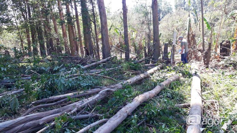 Fiscalização e GM flagram homens cortando eucaliptos de forma ilegal em área pública no Itamarati - Crédito: Colaborador/SCA